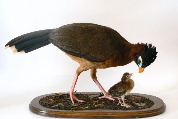 bird-1-20120921-19452524742FA8CF5D-932A-462A-2825-80EF9EFD3CC6.jpg
