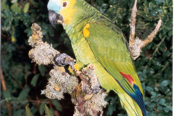 bird-10-20120921-123164262935624592-F9CB-39E6-6D4A-A05C2684B0A9.jpg