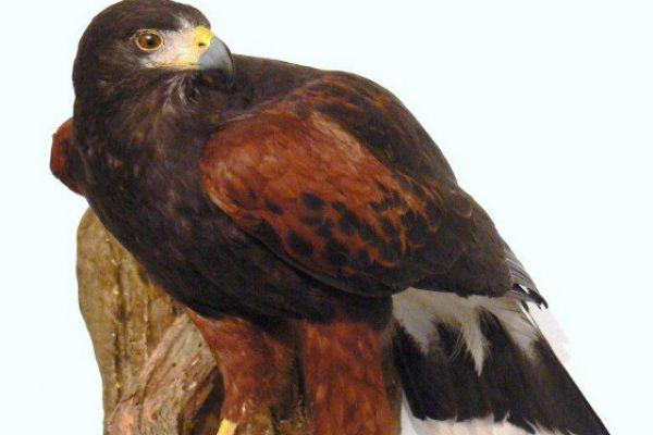 bird-4-20120921-1948332722A41AFD77-E750-66C3-0907-331E13D44CFA.jpg