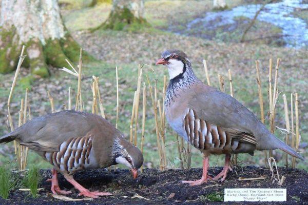 bird-6-20120921-1057422808CF026265-7F34-59F0-4BD3-4D1EBF923C71.jpg